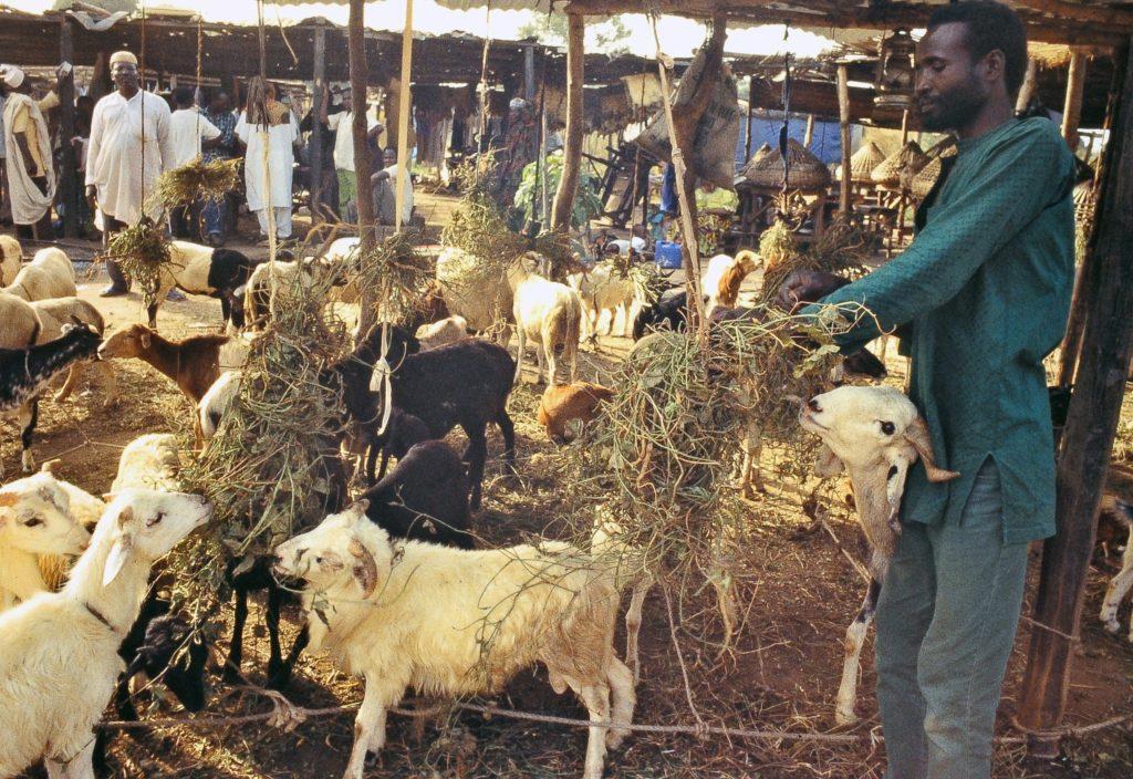Revue de bétail